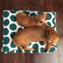Snooza Pet Cushions