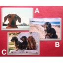 Dachshund Rescue cards