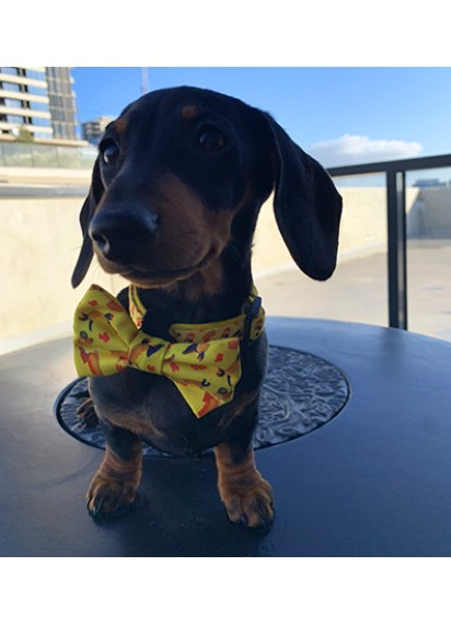Haute Dox 'Shake 'N' Dog' Collar & Bow Tie