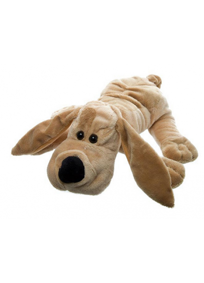 Monty dachshund for pooch parents